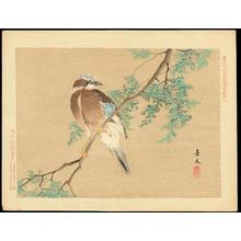 Keibun Matsumoto: Eurasian Jay and Chinese Arborvitae - ?(カシドリ・カケス) 扁柏(コノテガシワ) - Ohmi Gallery