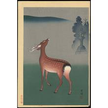 Koyo: Deer - Ohmi Gallery