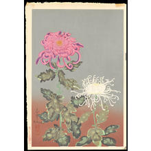 Bakufu Ohno: Chrysanthemum (Red and White) - Ohmi Gallery