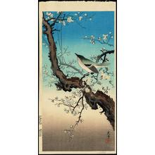 Tsuchiya Koitsu: Plum Warbler - 梅鶯 - Ohmi Gallery