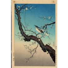 風光礼讃: Plum Warbler - 梅鴬 - Ohmi Gallery