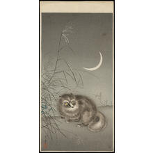 Tsuchiya Koitsu: Tanuki (Racoon Dog) - 狸 (1) - Ohmi Gallery