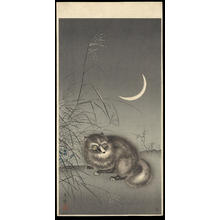 風光礼讃: Tanuki (Racoon Dog) - 狸 (1) - Ohmi Gallery