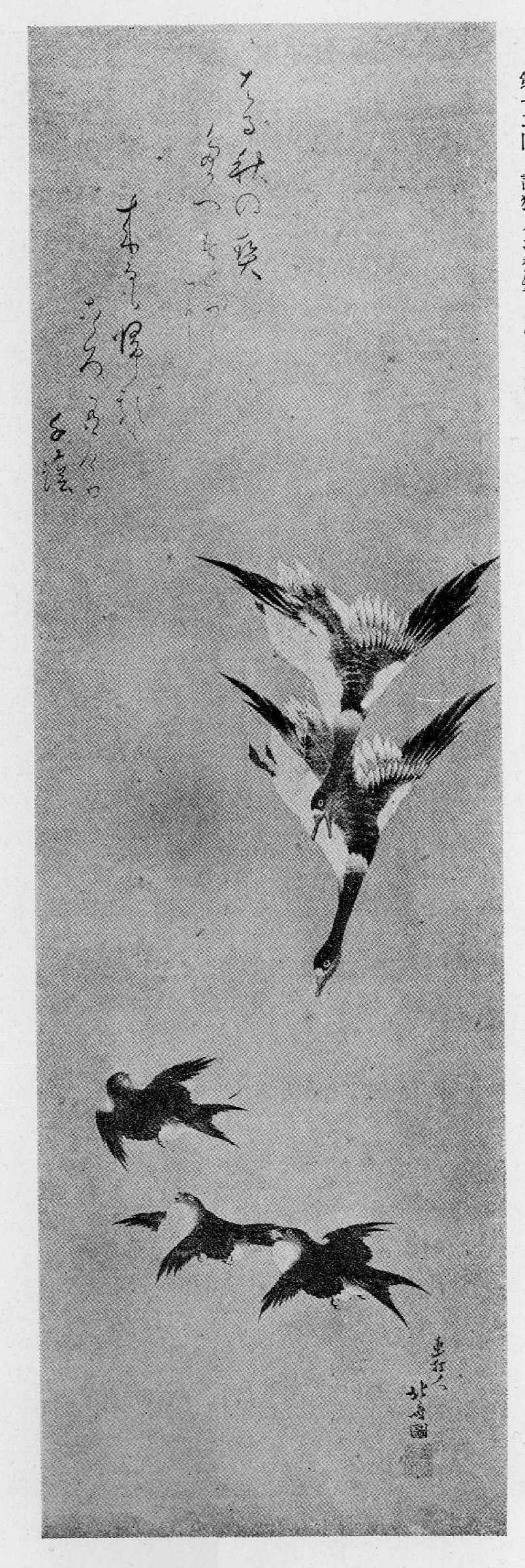 雁の画像 p1_39