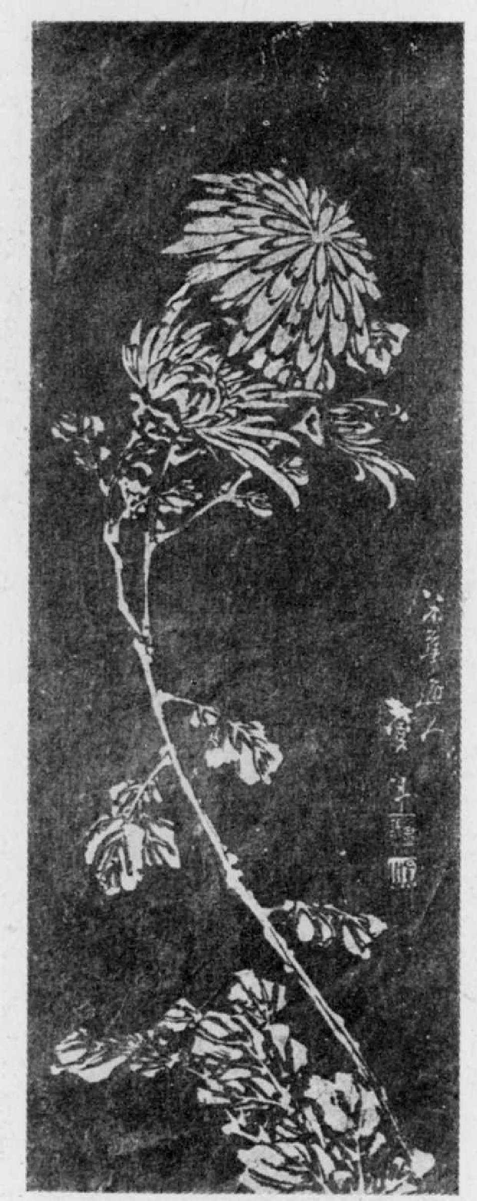 葛飾北斎: (菊) - 立命館大学 - 浮世絵検索