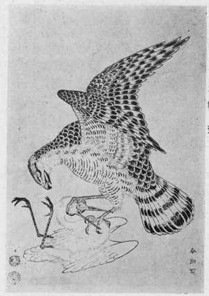 勝川春潮: (鷹と鶯) - 立命館大学