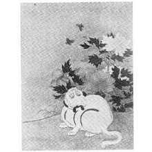 Suzuki Harunobu: (蝶と猫) - Ritsumeikan University