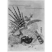 湖龍斎: (山鳥と鷺) - 立命館大学