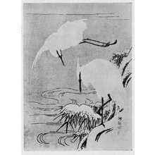 湖龍斎: (鷺) - 立命館大学