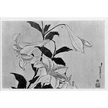 Katsushika Hokusai: (百合) - Ritsumeikan University