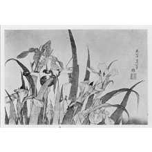 Katsushika Hokusai: (菖蒲) - Ritsumeikan University