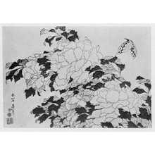 Katsushika Hokusai: (牡丹) - Ritsumeikan University