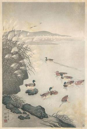 小原古邨: Mallards in Coastal Scene - Robyn Buntin of Honolulu