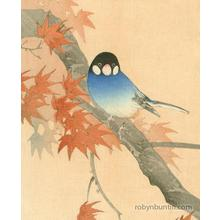 Ito Sozan: Java Sparrow and Maple - Robyn Buntin of Honolulu