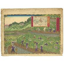 Utagawa Hiroshige III: Orange Grove in Kii - Robyn Buntin of Honolulu