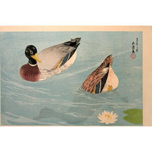 Hashiguchi Goyo: Pair of Ducks - Scholten Japanese Art