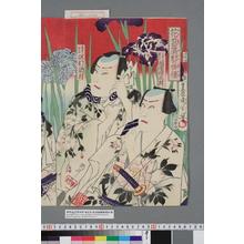 Toyohara Kunichika: 「花菖蒲対の俳優」「三筋の網五郎 河原崎三升」「?菊の紀の介 沢村訥升」 - Waseda University Theatre Museum