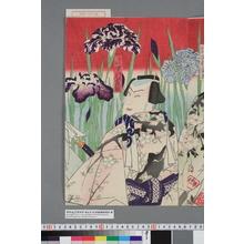 Toyohara Kunichika: 「新王の駒 中村芝翫」 - Waseda University Theatre Museum
