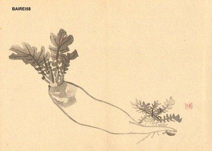 Kono Bairei: DAIKON (radish) - Asian Collection Internet Auction