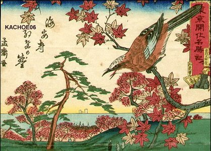 歌川芳虎: Bird on maple tree - Asian Collection Internet Auction