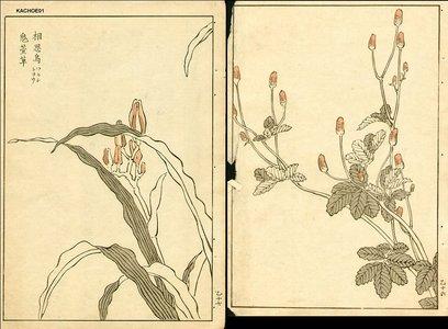 Kono Bairei: Florals - Asian Collection Internet Auction
