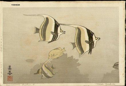 Yoshida Toshi: Hawaiian Fish A - Asian Collection Internet Auction
