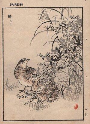 Kono Bairei: Partrige, one album page - Asian Collection Internet Auction