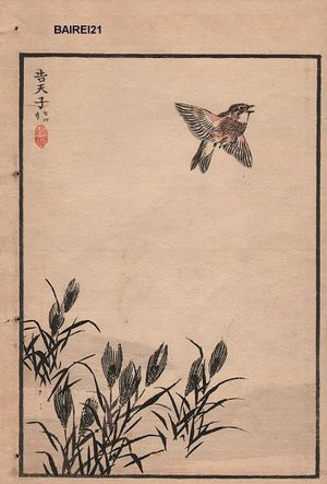 幸野楳嶺: Sparrow and rushes, one album page - Asian Collection Internet Auction
