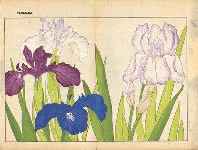Tanagami, Konan: Iris - Asian Collection Internet Auction