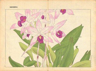 Tanagami, Konan: Laelia Anseps - Asian Collection Internet Auction