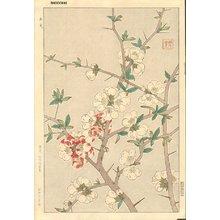 Kawarazaki, Shodo: Japanese quince - Asian Collection Internet Auction