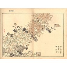 Kono Bairei: Chrysanthemum - Asian Collection Internet Auction