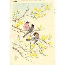 Ashikaga, Shizuo: Bullfinch and Golden Ball - Tree - Asian Collection Internet Auction