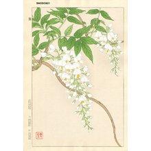 Kawarazaki, Shodo: Wisteria - Asian Collection Internet Auction