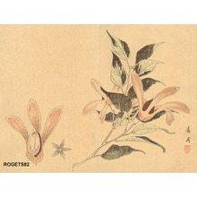 Yoshimi, Rogetsu: Botanical print - Asian Collection Internet Auction