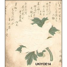 二代目鳥居清満: Peony with blind printing - Asian Collection Internet Auction