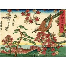 Utagawa Yoshitora: Bird on maple tree - Asian Collection Internet Auction