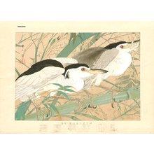 Tsuchiya, Rakuzan: Night Herons and Bamboo - Asian Collection Internet Auction