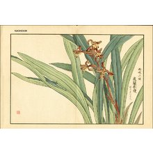 Kose, Shoseki: Orchid - Asian Collection Internet Auction