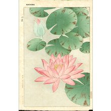 Kawarazaki, Shodo: Red waterlily - Asian Collection Internet Auction