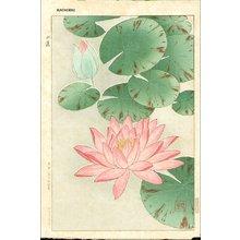 Kawarazaki, Shodo: Red waterlily - Asian Collection Internet Auction
