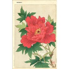 Kawarazaki, Shodo: Peony - Asian Collection Internet Auction