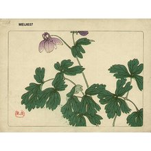 Shibata Zeshin: Floral - Asian Collection Internet Auction