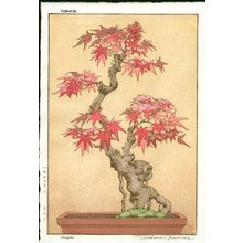 Yoshida, Tsukasa: Maple (maple bonzai) - Asian Collection Internet Auction