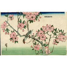 Utagawa Hiroshige: Swallow and cherry blossoms - Asian Collection Internet Auction