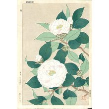Kawarazaki, Shodo: Camelias - Asian Collection Internet Auction