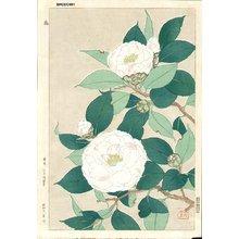 Kawarazaki, Shodo: Camelias - Asian Collection Internet Auction
