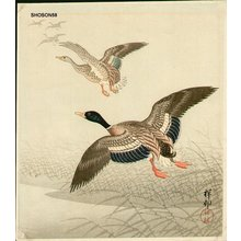 Shoson Ohara: Mallards over reeds - Asian Collection Internet Auction