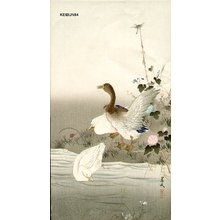 Matsumura Keibun: Ducks and dragon fly - Asian Collection Internet Auction