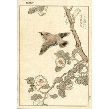 幸野楳嶺: Bunting - Asian Collection Internet Auction